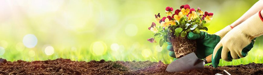 prepare soil for planting flower