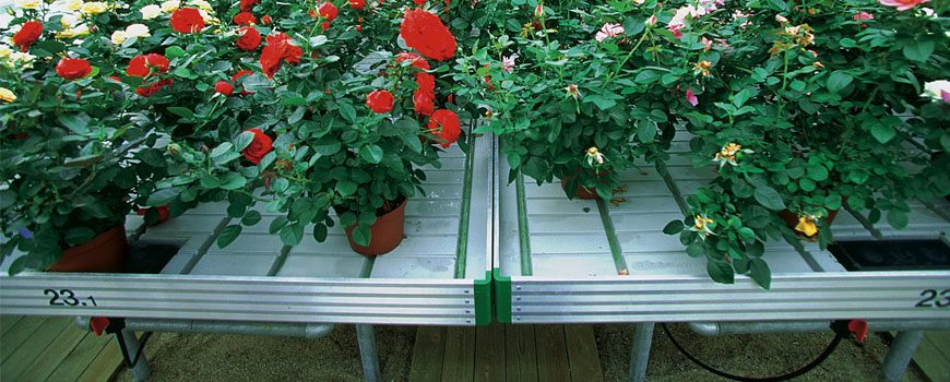 irrigation-system-for-your-greenhouse-flow-bench-irrigation-system
