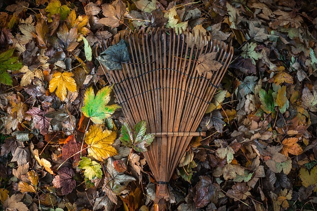 a rake on top of a dried leaves on a lawn